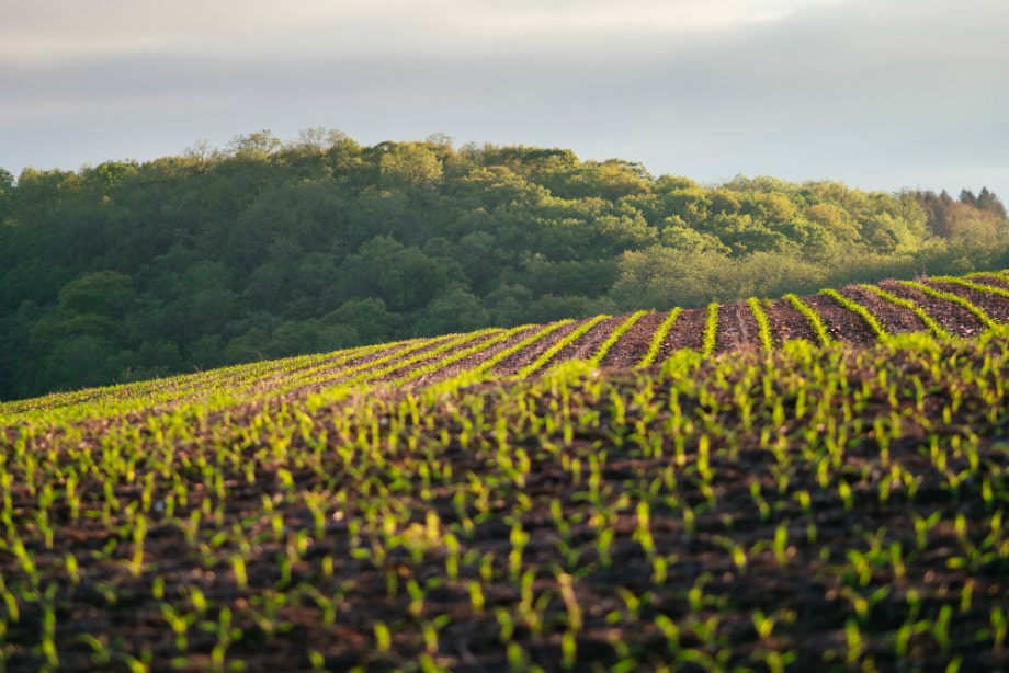 5 reasons to invest in Drones in Farming