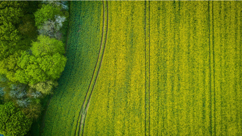 agricultural drone crop analysis and mapping